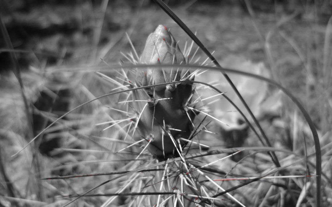Cactus – B&W